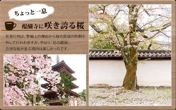 ちょっと一息 醍醐寺に咲き誇る桜